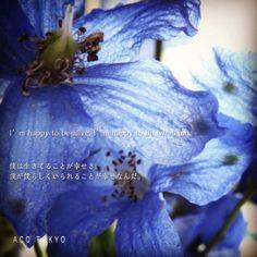 #写真 #Photo #コトバ #言葉 #インスタ加工 #花 #flower