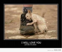 This breaks my heart. I wish I could adopt all the animals that are being neglected or abused.
