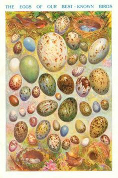 Eggs of best known birds printable image free √