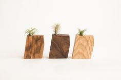 """one-of-a-kind Tillandsia (""""air plants"""") planters made of off-cut wood"""