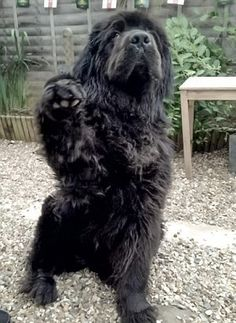 Newfoundland during a dance