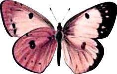 borboleta rosa 3
