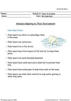 PrimaryLeap.co.uk - Animals adapting to their environment Worksheet