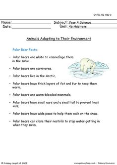 PrimaryLeap.co.uk - Animals adapting to their environment Worksheet