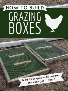 DIY building chicken grazing boxes that keep greens available to cooped chickens – DIY Garten Box Chicken Pen, Chicken Coup, Best Chicken Coop, Building A Chicken Coop, Chicken Coop With Run, Urban Chicken Coop, Diy Chicken Feeder, Magic Chicken, Chicken Coop Plans Free