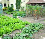 10 tips for companion planting for natural pest control and organic sustainability - Increase vegetable yields and improve flavor
