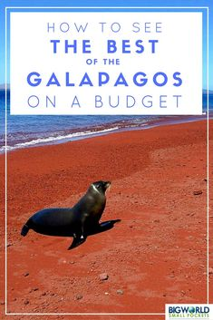 How to travel to the Galapagos, Ecuador, on a budget (tip #1: fly from Guayaquil instead of Quito)