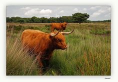 This picture is taken in Drenthe, the province I live. I love it here.