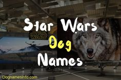Star Wars Dog Names – Best Inspired Popular Dog Names Attitude Caption For Instagram, Instagram Captions For Friends, Puppy Names, Pet Names, Black Dog Names, Popular Dog Names, Funny Wifi Names, Cute Names For Dogs, Female Dog Names