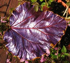 Concrete Rhubarb leaf from ConcreteImpressions on Etsy. Skip on over to the site for some REALLY pretty art work.
