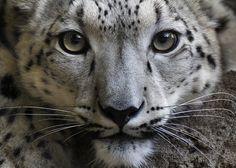 Snow Leopard - Canon Digital Photography Forums