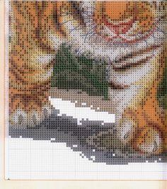 BONITO-TIGRE-6.jpg (652×740)