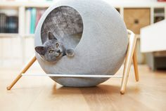 """Meyou Paris is trying to give the phrase """"cat fancy"""" a whole new meaning."""