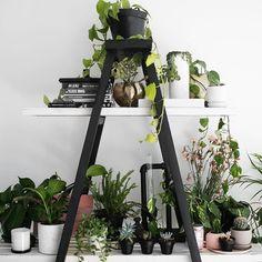 Decor: mostly plants    #Regram via @rachelaust