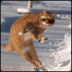 even the cats can ski in canada…lols