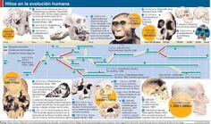 evolución especia humana