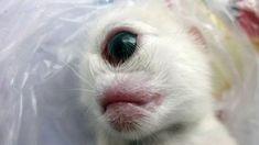 Top 10 MOST SHOCKING Animal Mutations