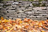 dry stone wall autumn leaves background