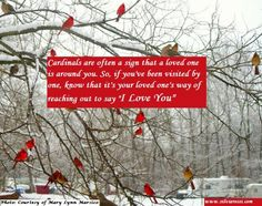 I cannot tell you how many times Cardinals have come up in my sessions with clients as a sign from a loved one in heaven. In the Christian faith, this crimson beauty is a symbol of Christ's love fo...