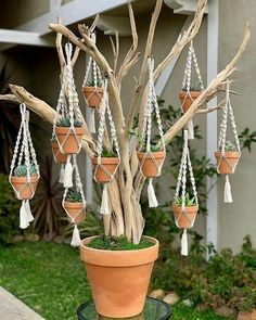 cute is this succulent tree? 💚😍 - - How cute is this succulent tree? 💚😍 – -How cute is this succulent tree? 💚😍 - - How cute is this succulent tree? Macrame Art, Macrame Projects, House Plants Decor, Plant Decor, Garden Crafts, Garden Art, Cacti Garden, Succulent Gardening, Container Plants