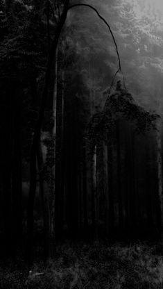 Dark Landscape, Arte Obscura, Dark Photography, Dark Places, Dark Forest, Solitude, Macabre, Aesthetic Art, Wall Collage