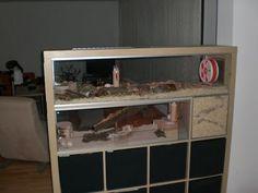 Near-natural hamster enclosure: 9234cm ² Expedit for Roborowski