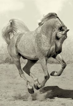Amazing Photographs of Horses | 20+ pictures | See More Pictures | #BeautifulPictures