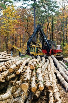 Check out these seven tips on how to sell timber before you decide to harvest and sell the trees on your property.data-pin-do=