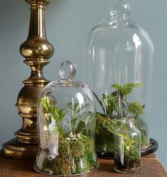 I'm just crazy for terrariums at the moment & want to make some. These bell jars would be wonderful.