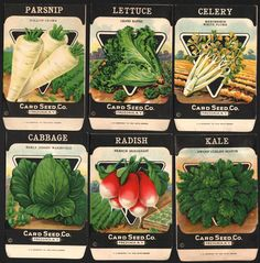 See which veggies you can grow during the colder months #spon