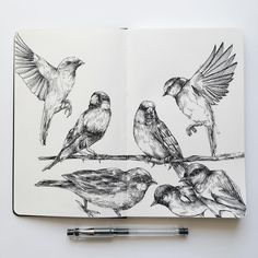 Drawing birds at the park. Diverse Black and White Surreal Drawings. By Alfred Basha.