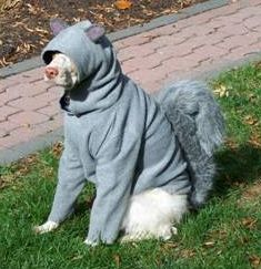 Squirrel costume for dog!  I had a hard time deciding whether to post this under Dog Stuff or Made me LAUGH - It made me LOL