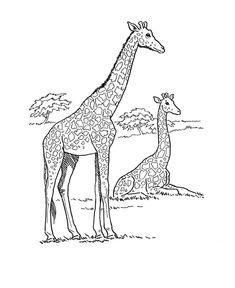 Wild animal coloring page | African Giraffe Coloring page