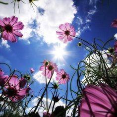 Reposting @massimo.gulli: #landscape #nature #bluesky #sicily #flowers #autumn #instagood #instalike
