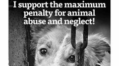 How many of you hate or in tears hearing or seeing sick evil animal cruelty/death, I am starting this campaign for animals everywhere in the world that deserves love, and respect like we want, animals like dogs, cats, horses, bears, tigers etc all have a right not to be deliberately hurt or killed...