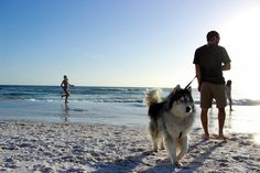 Meet the Dogs of 30A Thanksgiving 2015: Canines hit the beach