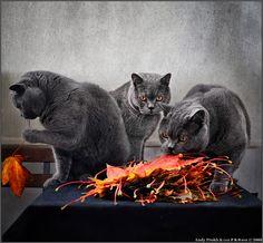 PHOTO: ОНИ СОЖРАЛИ МОЮ ОСЕНЬ! | PHOTOGRAPHER: ANDY PROKH