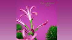 Mikkel Metal - Patience 'Pop Ambient 2014' Album