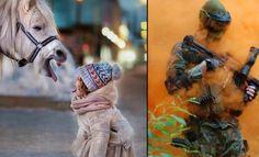 Imagens diversas #23 (18 fotos) >> http://www.tediado.com.br/02/imagens-diversas-23-18-fotos/