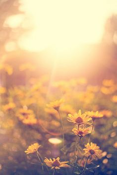 summer bokeh by a.matzke, via Flickr                                                                                                                                                      More
