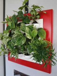 Festive Flowall Vertical Garden with Red Frame. Great Xmas Gift.