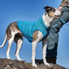Start Of Winter, Travel Supplies, Hiking Dogs, Dog Activities, Dog Jacket, Dog Travel, Dog Coats, Dog Harness, Pet Health