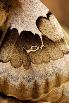 Moth Wing Detail by ~explicitly on deviantART