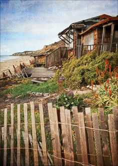 Beach cottage -  #Home #Ocean & #OceanFront #Design  #View ༺༺  ❤ ℭƘ ༻༻