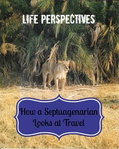 How a Septuagenarian Looks at Travel - The Daily Adventures of Me https://link.crwd.fr/3xwr