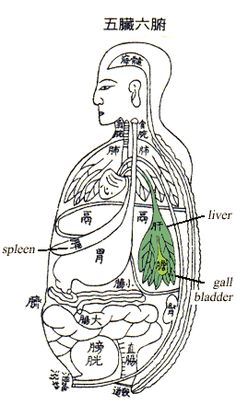 The liver and gallbladder belong to the Wood Element. Illustrations Médicales, Medicine Illustration, Tai Chi Qigong, Acupressure Treatment, Making Decisions, Liver Cancer, Chakra System, Taoism, Japanese Graphic Design