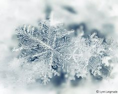 Winter Photography  snowflake wall art nature от LynnLangmade