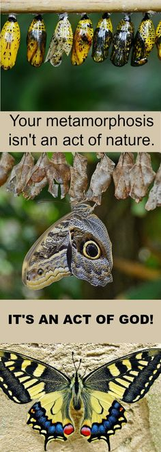 The metamorphosis of a butterfly and the process of spiritual transformation cannot be observed with the human eye. Only God sees what goes on in the secret places in the cocoon of a butterfly and the cocoon of the soul. And only God can bring to completion the good work that He begins in us when He transforms us spiritually.