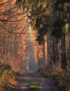 Peaceful forest road - nice place for a walk