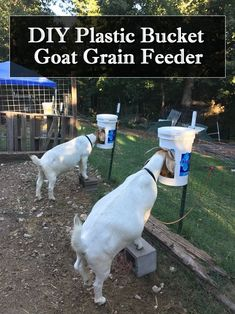 Bring out the plastic buckets, we have a simple diy project for you today. Having already featured many different goat hay feeders such as the diy garbage can Goat Hay Feeder, Diy Hay Feeder, Cabras Boer, Raising Farm Animals, Raising Goats, Goat Fence, Goat Playground, Goat Shed, Keeping Goats